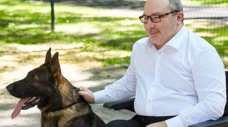 У Харкові відбудеться виставка собак пам'яті Кернеса