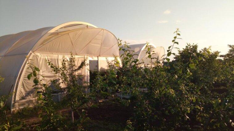 На Херсонщині вирощували елітні коноплі на мільйони гривень (фото)