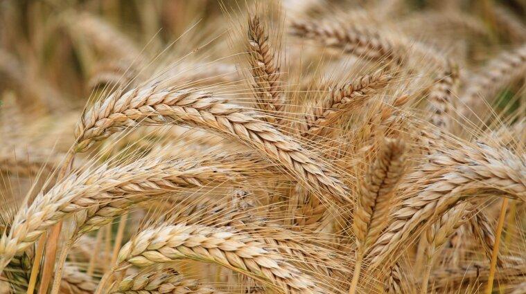 Від квітня в Україні заборонять імпорт пшениці та масла з Росії