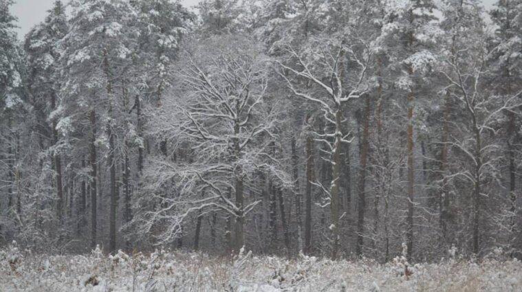 Сніг, дощі та вітер: синоптики розповіли про погоду в Україні