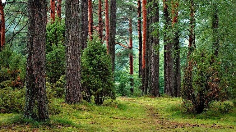 В Україні вперше за останні десять років перерахують ліси