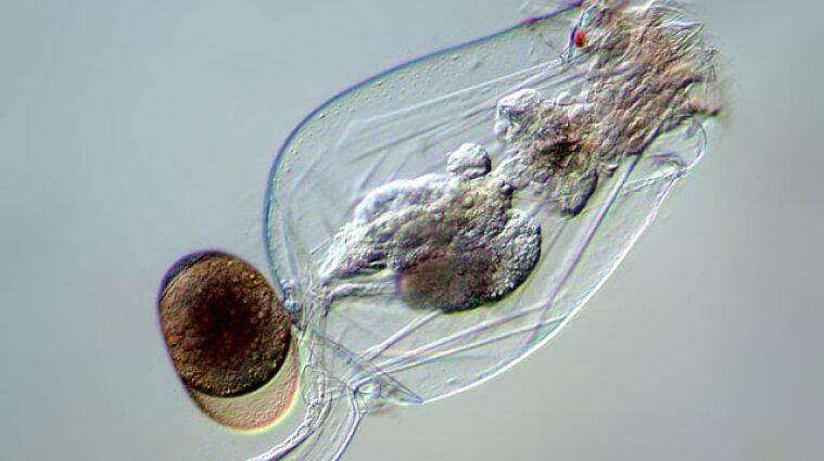 Після 24 тисяч років у вічній мерзлоті: вчені оживили тварину