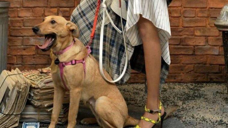 Безпритульний собака із Запоріжжя став моделлю в Vogue
