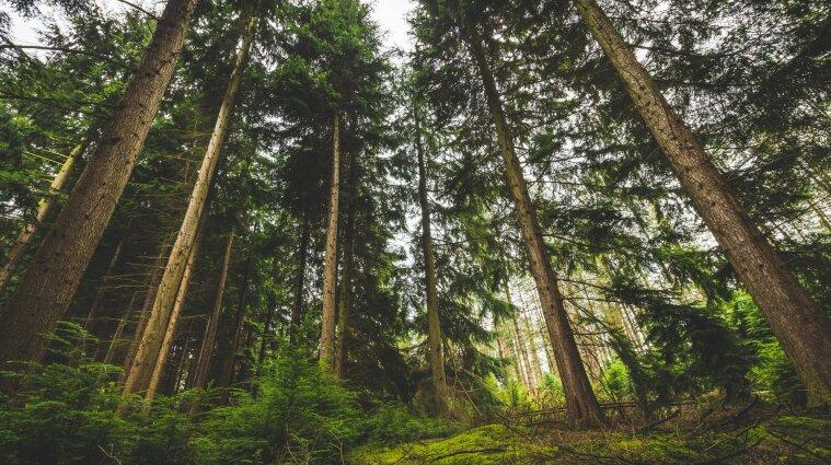В Волынской области мужчина приковал к дереву незнакомца и потребовал денег