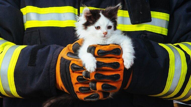 """Спасателям пришлось помогать коту, который """"искал приключения на одно место"""""""