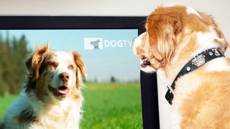 Учені з`ясували, що бачать у телевізорі коти і собаки