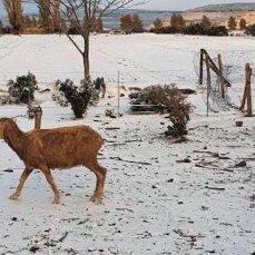 В Африці випав сніг, температура опустилася до десяти градусів морозу (відео)