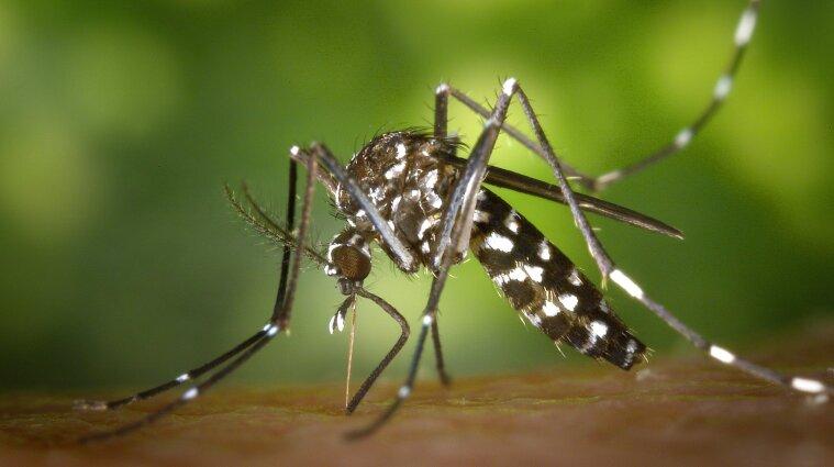 У Криму після потопу почалося нашестя комарів - відео
