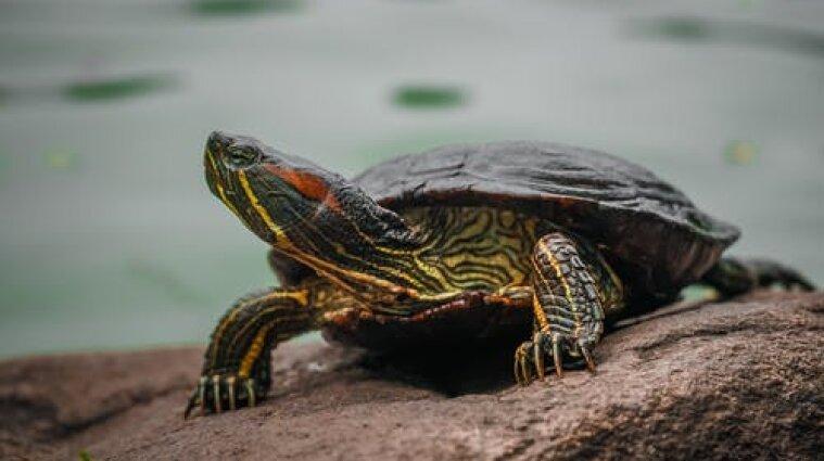 В Японии черепаха приостановила работу международного аэропорта
