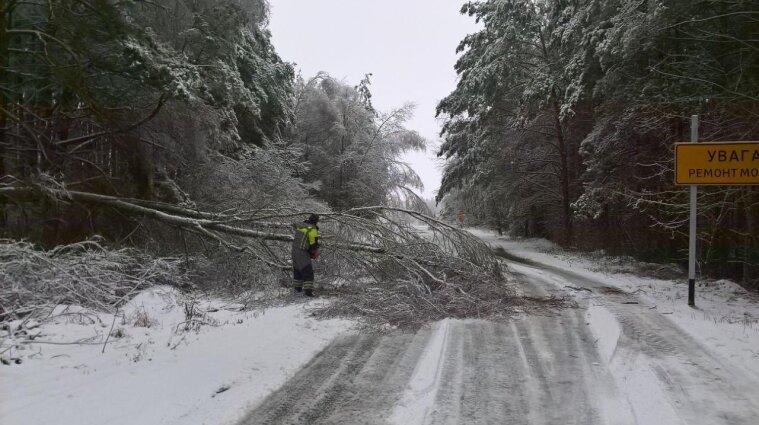 В Черниговской области снегопад повалил более 200 деревьев