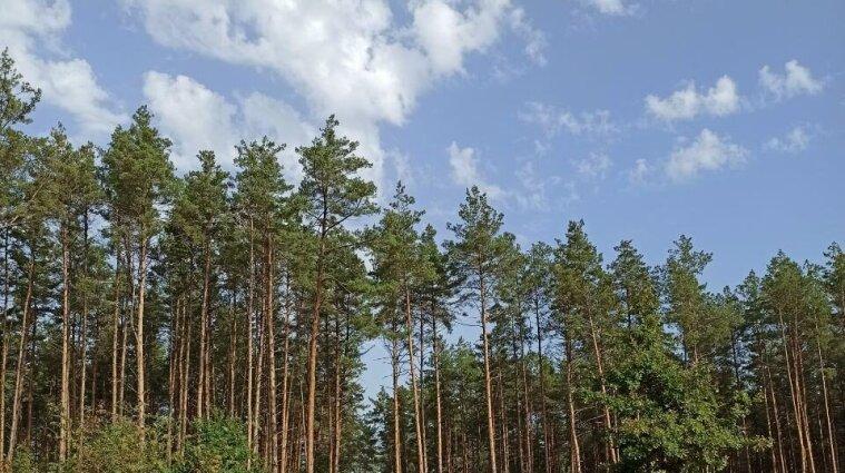 Жару в Украине разбавит дождь: синоптики о погоде в выходные