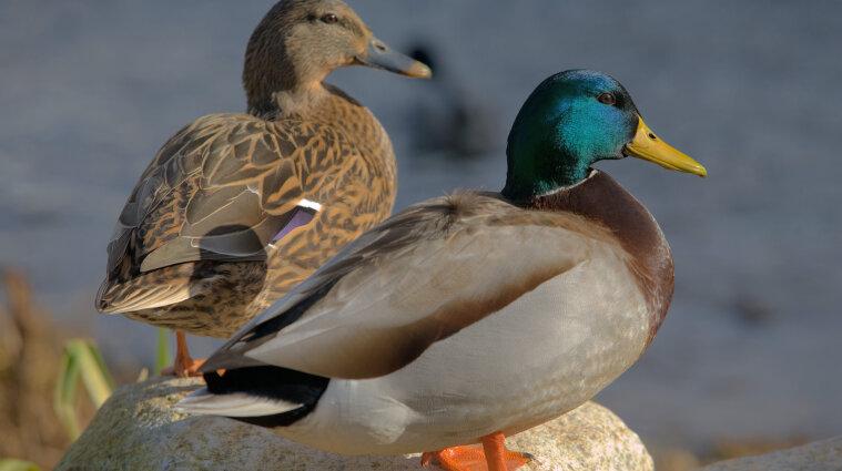 В Асканії-Новій загинули майже 200 червонокнижних птахів