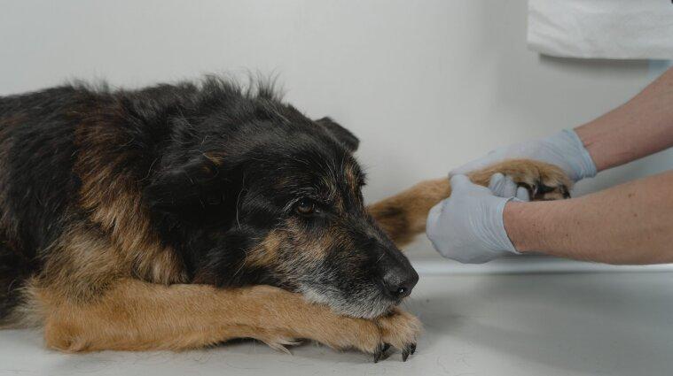 В Україні удосконалили законодавство в галузі ветеринарної медицини