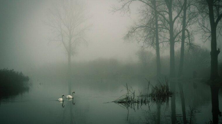 Ливни и туман: синоптики предупредили о непогоде