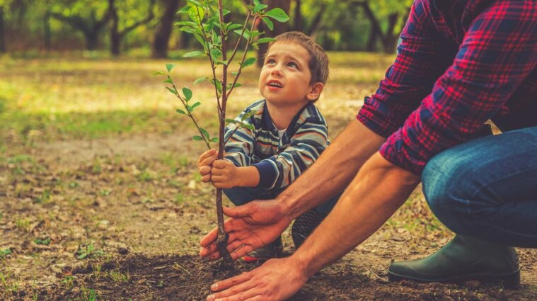 Шмигаль назвав реальним наказ Зеленського висадити мільярд дерев