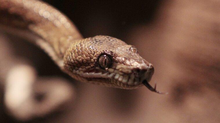 В Ивано-Франковской области троих детей укусила змея: они в тяжелом состоянии