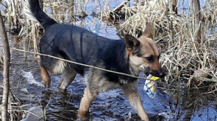 У Сумах пес прибирає від сміття річку, яку занедбали люди - фото
