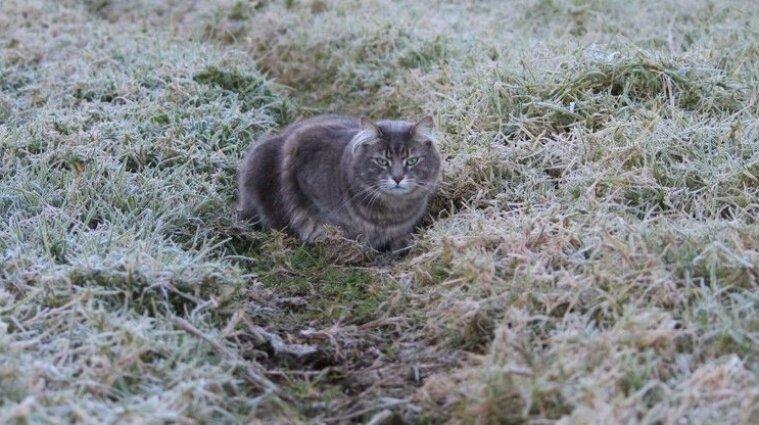 Заморозки и снег прогнозируют синоптики в Украине