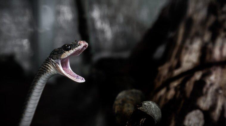 15 жителей Украины пострадали от укусов змей с начала года