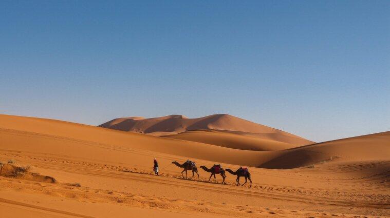 Туристов предупредили о новом вирусе в странах Ближнего Востока