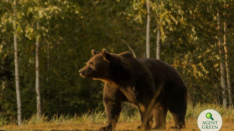 Принца Ліхтенштейну звинуватили в убивстві найбільшого в Євросоюзі бурого ведмедя