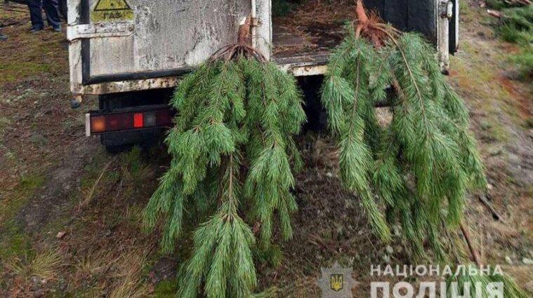 У лісі Чернігівської області чоловіки нарубали 800 сосен