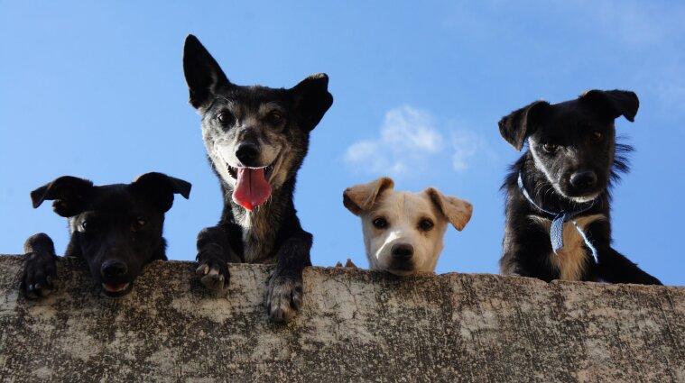 У США заборонили завозити собак зі 110 країн: Україна теж у списку