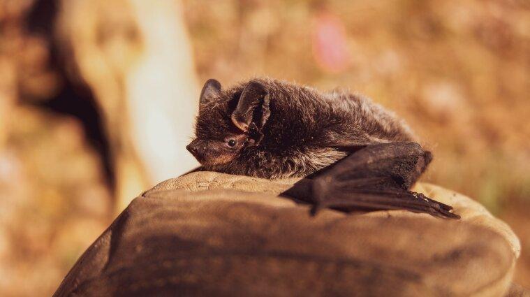 У Дніпрі на балконі багатоповерхівки поселилися 500 кажанів