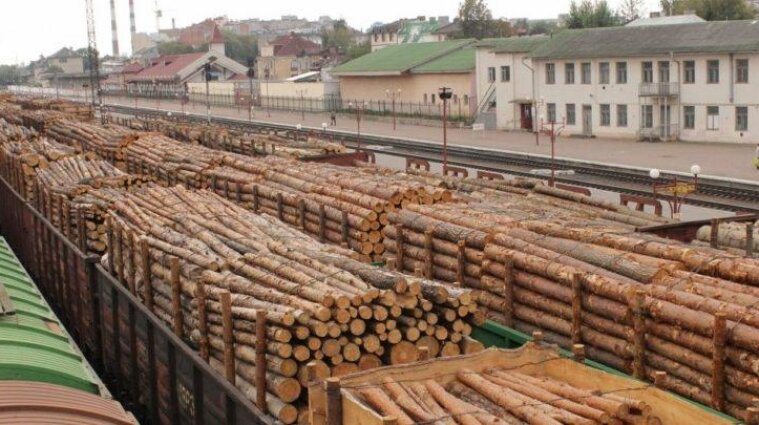 В Госэкоинспекции за год насчитали всего 312 миллионов убытков лесам Украины