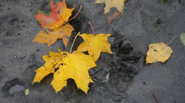 Холод та дощі повертаються: коли до України прийде справжня осінь