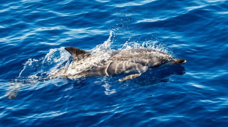 У Нідерландах знайшли близько сотні мертвих дельфінів