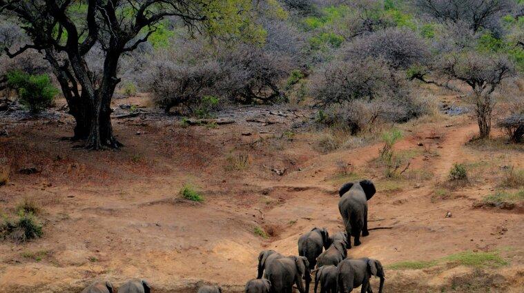 Почти 20 слонов погибли в Индии от удара молнии - фото