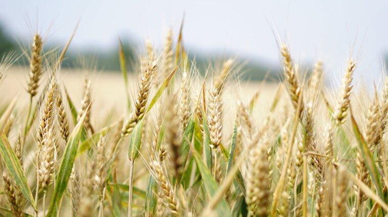 Сдавали госземли в аренду и забирали 80% урожая: СБУ разоблачила коррупционную схему