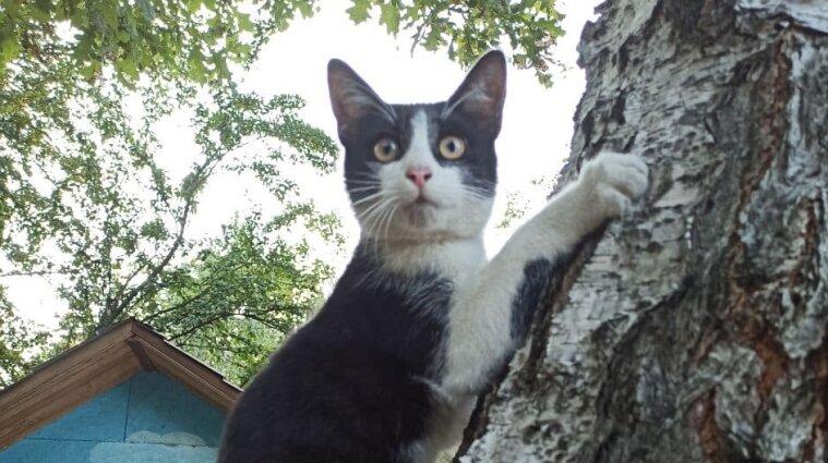 Бездомным кошкам в Измаиле отрезали лапы