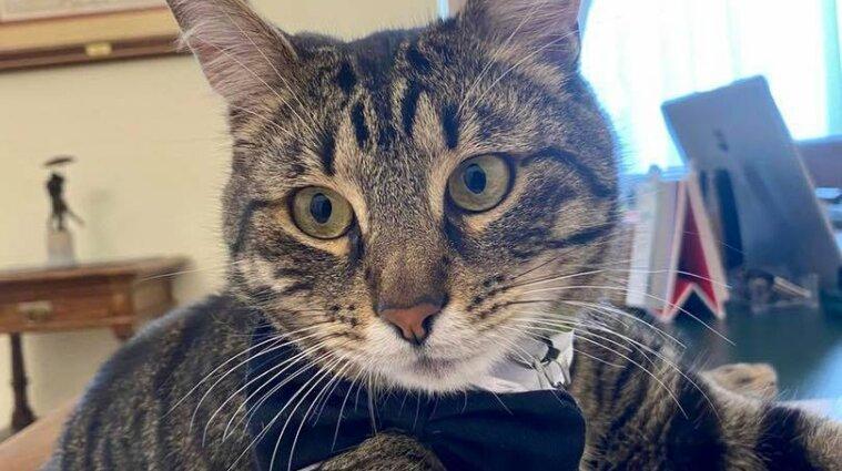 """Нашли  """"мэрского"""" кота, однако он нуждается в помощи"""