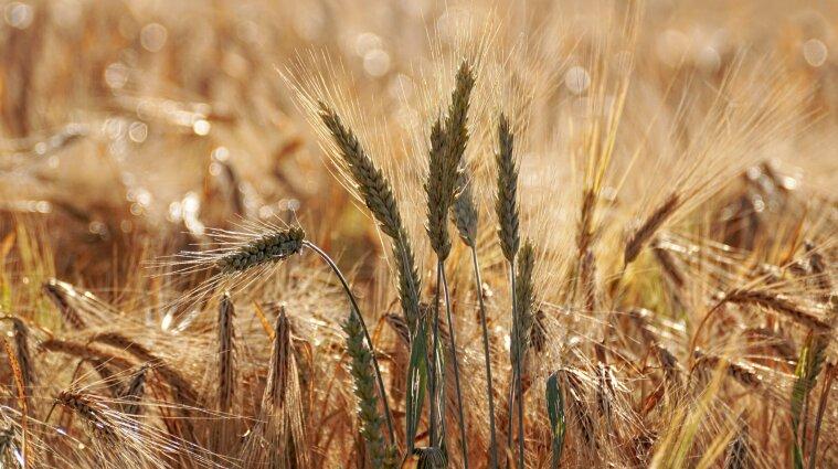В Украине ожидается наибольший урожай за всю историю, начиная от Киевской Руси - Кульбида