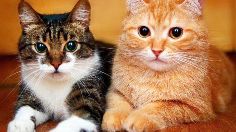 В Беларуси арестовали двух кошек из-за неуплаченного штрафа за протесты
