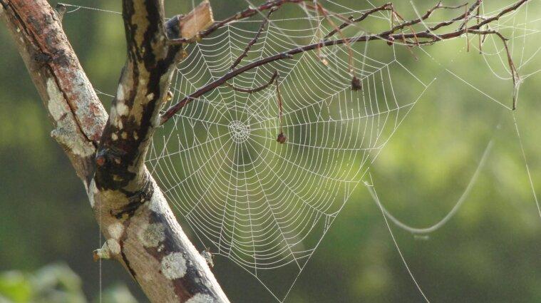 Укус викликає оніміння: надзвичайно отруйного павука знайшли на Троєщині в Києві (фото)