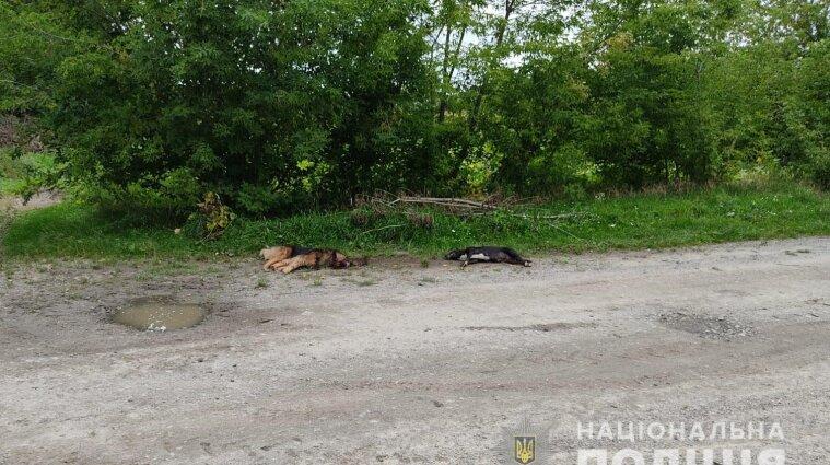 Мешканець Волинської області застрелив двох сусідських собак