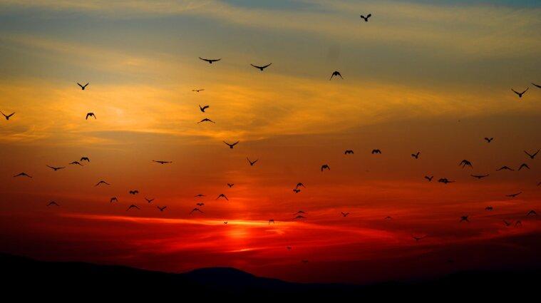 На планете Земля живет около 50 миллиардов птиц - ученые