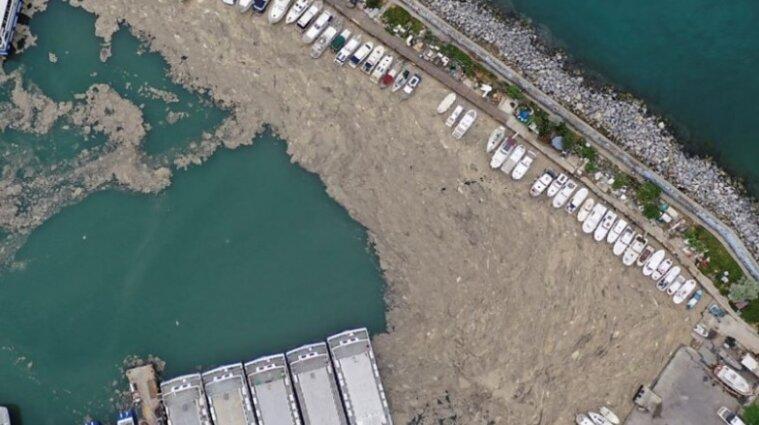 """Море у Туреччині заполонили """"морські шмарклі"""" - відео"""