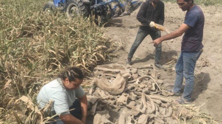 У Туреччині фермер на своєму полі знайшов скам'янілі кістки слона, яким тисячі років - фото
