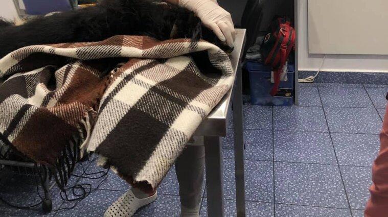 Чоловік у Києві викинув собаку у вікно та не давав його врятувати
