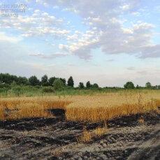 Понад 50 гектарів пшеничного поля згоріло у Чернігівській області - фото
