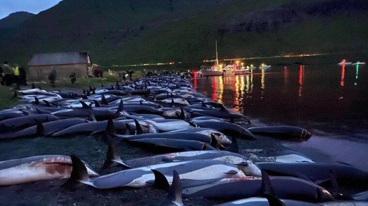На Фарерських островах мисливці вбили майже 1500 дельфінів - фото