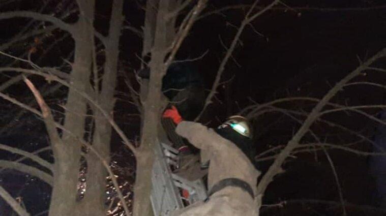 Підліток у Покрові рятував кота і сам застряг на дереві