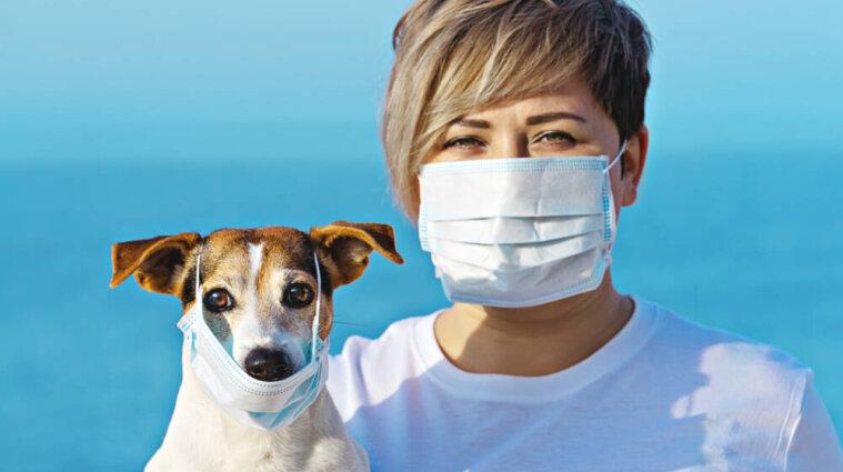 У Франції собак навчили винюхувати хворих на коронавірус