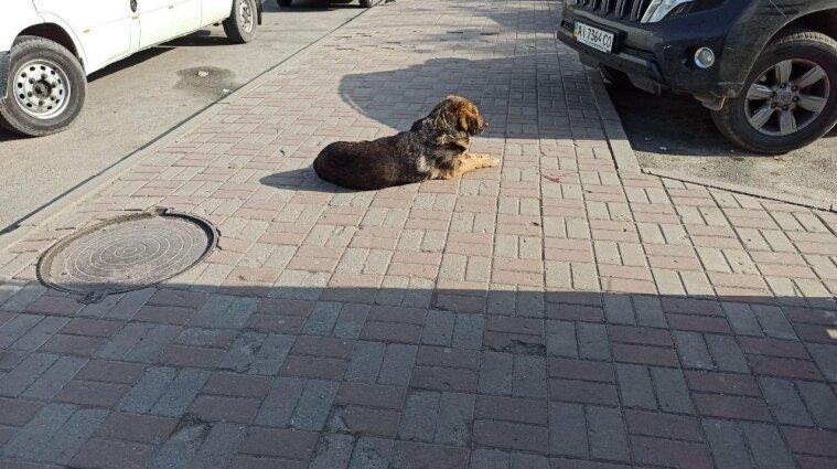 Чи реально в Україні покарати тих, хто жорстоко поводиться із тваринами - пояснення МВС