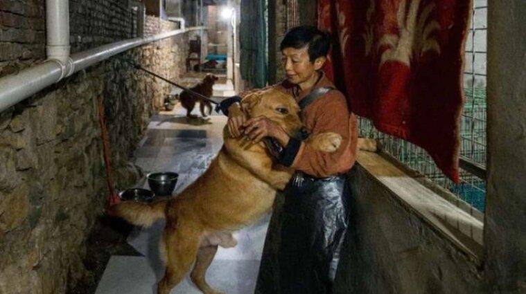 У Китаї місцева жителька тримає в будинку майже півтори тисячі котів і собак – відео