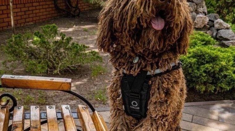 В Донецкой области собака Банана будет работать психологом-терапевтом